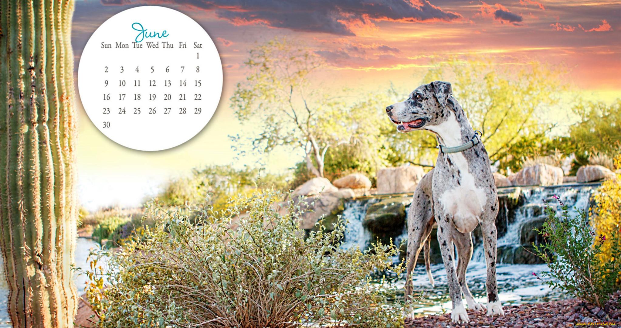 Картинки для календаря животные
